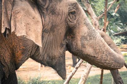thai-elephant_925x